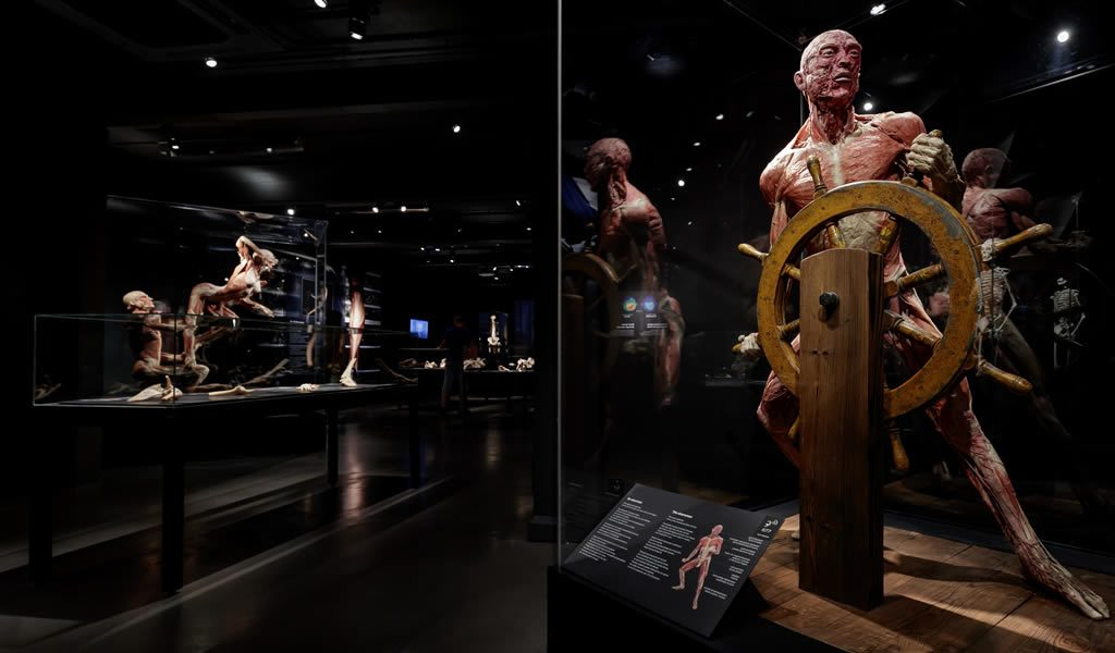 Ticket BODY WORLDS Amsterdam