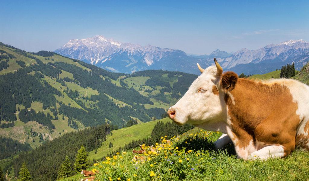 Korting 6 dagen Tirol in Oostenrijk
