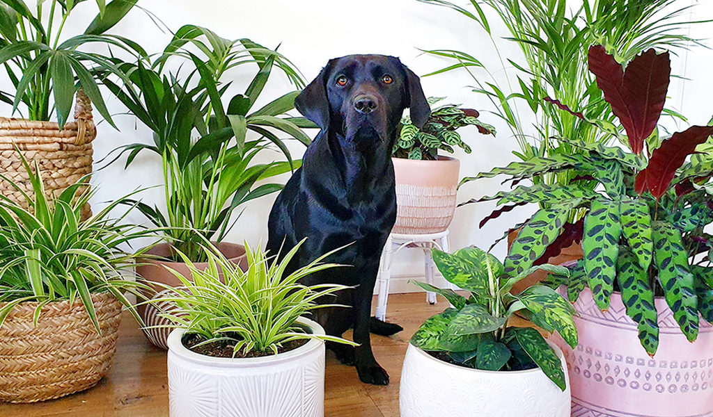 Mix van 4 diervriendelijke kamerplanten